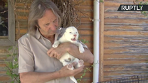 Białe lwiątko przyszło na świat w rezerwacie pod Sevillą