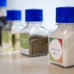 Białko z rzepaku ma szansę zrewolucjonizować rynek spożywczy i naszą dietę