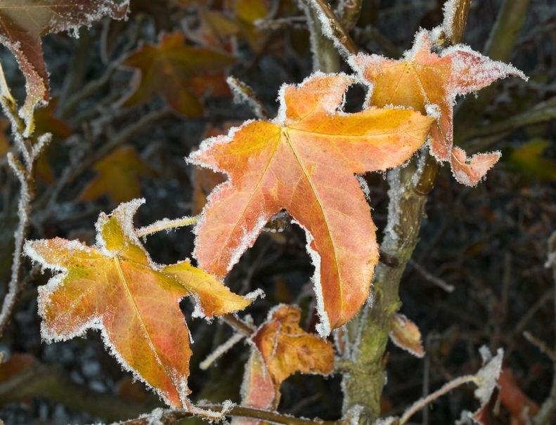 Białorusini mają mroźną jesień /123RF/PICSEL