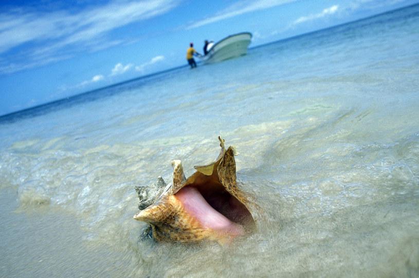 Biały piasek i kryształowa woda to wizytówki Samany /123RF/PICSEL