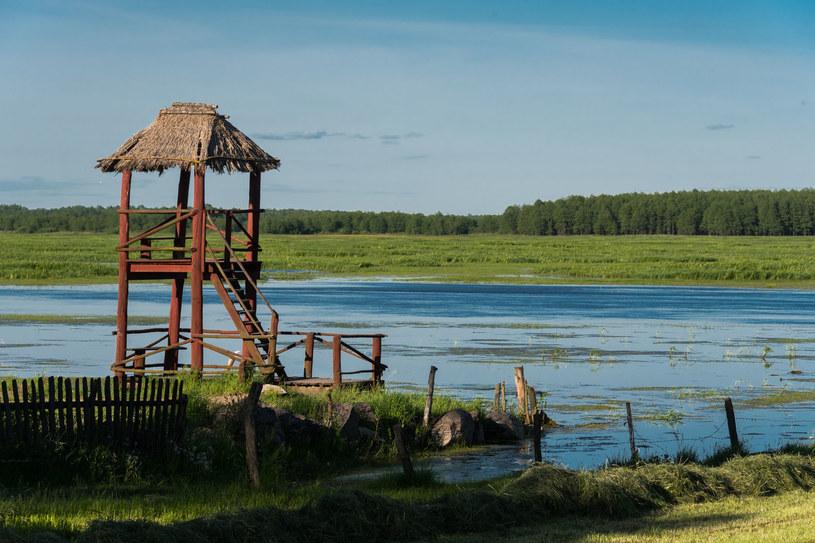 Biebrzański Park Narodowy /123RF/PICSEL