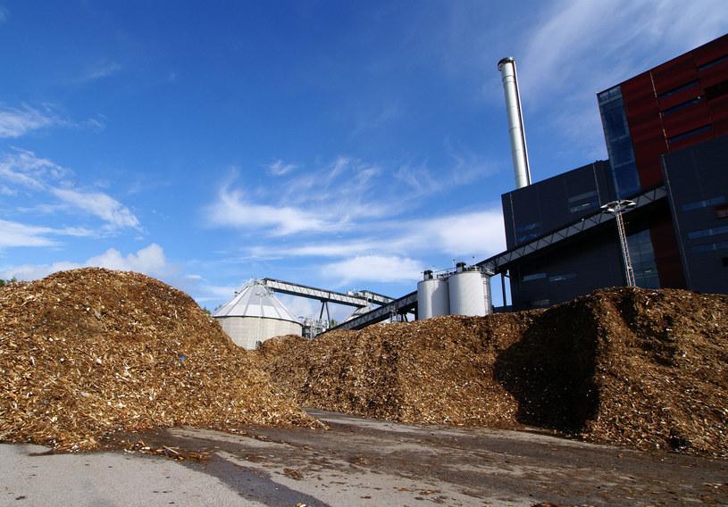 Biomasa odpowiada za ponad 10 proc. końcowego zużycia energii w UE /123RF/PICSEL
