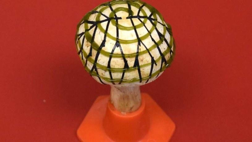 Bioniczne grzyby odtwarzają zależności istniejące między grzybami a cyjanobakteriami w przyrodzie /materiały prasowe