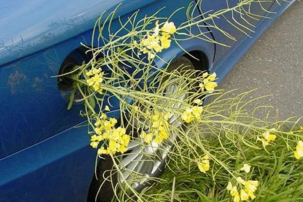 Biopaliwo budzi wątpliwości /INTERIA.PL