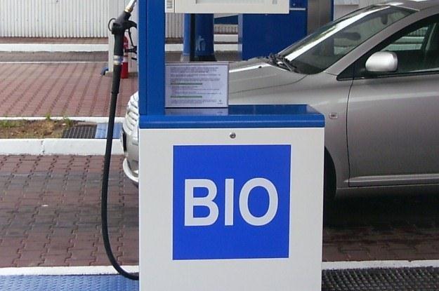 Biopaliwo budzi wiele kontrowersji /INTERIA.PL