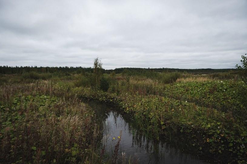 Bioróżnorodność torfowisk powstawała przez setki lat /ALESSANDRO RAMPAZZO /AFP