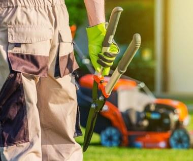 Błędy, jakie popełniamy w pielęgnacji ogrodu