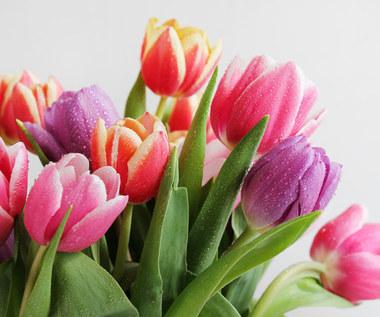 Błędy, które popełniamy z wiosennymi roślinami