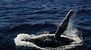 Bliskie spotkania z wielorybem