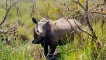 Bliskie spotkanie z nosorożcami