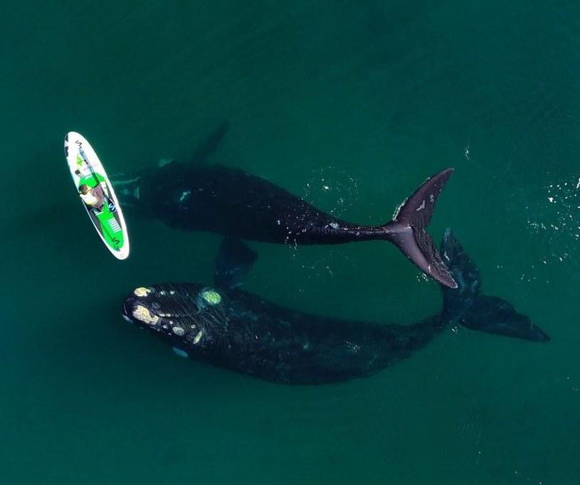 Bliskie spotkanie z wielorybami /Instagram/Maxi Jonas /Archiwum autora