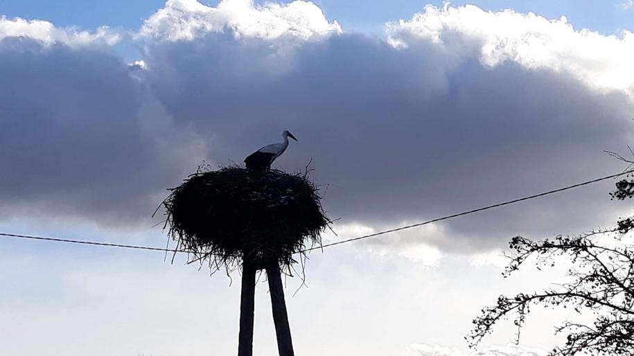 Bocian z miejscowości Dągi w gminie Dywity koło Olsztyna /Foto. Iza Kurzak /