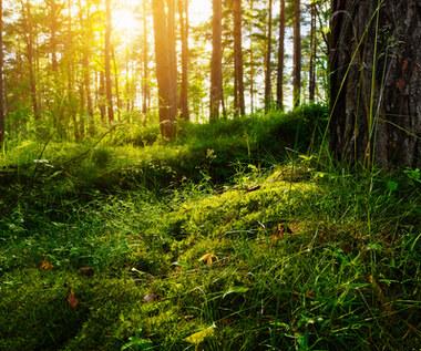 Bogactwo ukryte w lasach
