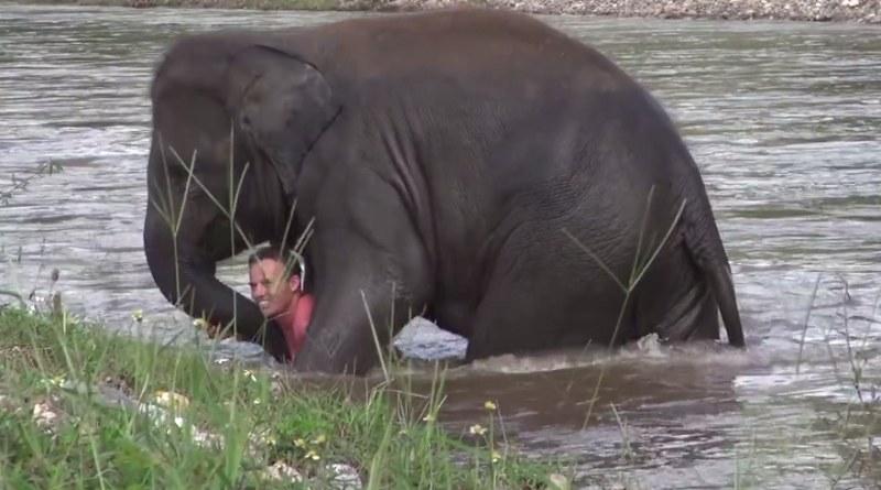 Bohaterska słonica bez wahania ruszyła na ratunek swojemu przyjacielowi /elephantnews /YouTube