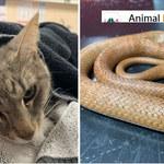 Bohaterski kot zginął, ratując dwoje dzieci