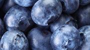 Borówka amerykańska: niebieska ochrona zdrowia