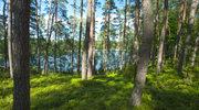 Bory Tucholskie. Ostatnie dzikie rejony Polski