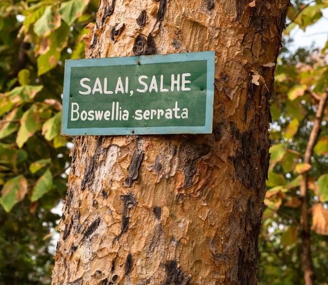 Boswellia /©123RF/PICSEL
