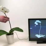 Botanicus Interacticus - roślina jak kontroler