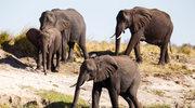 Botswana - dzika przyroda dla najbogatszych
