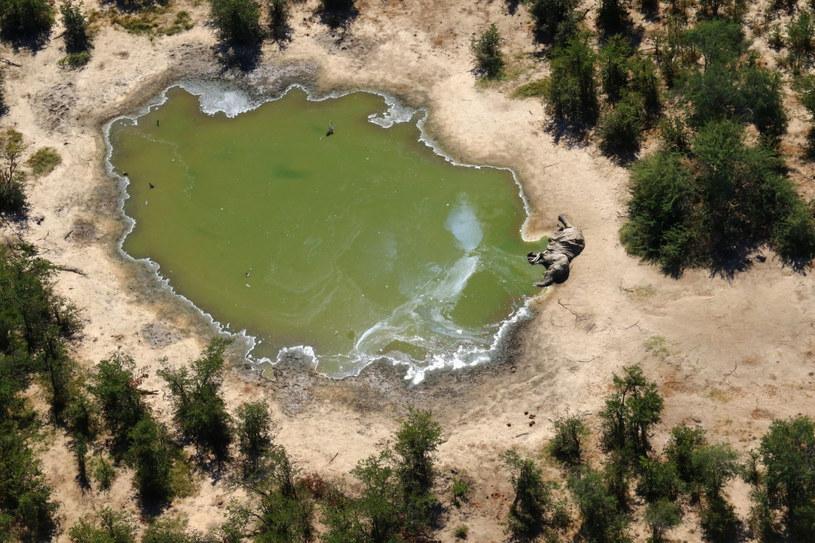 Botswana jest domem dla jednej trzeciej populacji słoni w Afryce /AFP /East News