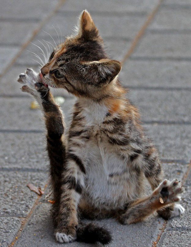 Bramkarz Oxfordu przekonał się, że ratowanie kotów to nie przelewki /AFP