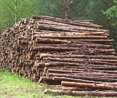 Branża drzewna w Polsce: Czeka nas katastrofa