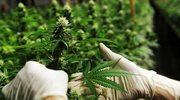 Brazylia: Marsz na rzecz legalizacji marihuany