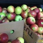 Bronisze: Jabłek, śliwek i gruszek mniej - a to oznacza: drożej! Dużo warzyw i grzybów