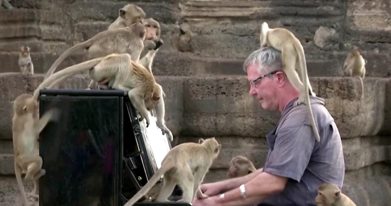 Brytyjczyk zagrał koncert na pianinie dla setek głodnych małp.