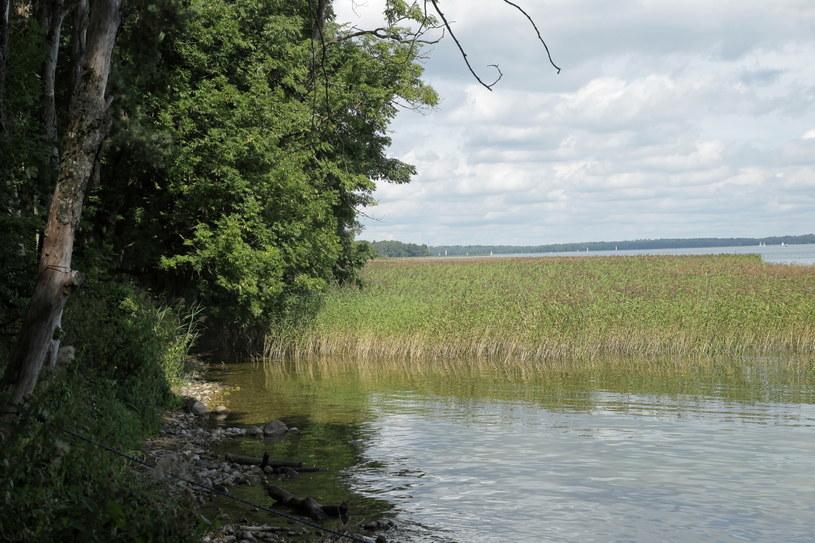 Brzeg jeziora Kisajno w miejscowości Fuleda. To tam trwają poszukiwania zaginionego Piotra Woźniaka-Staraka /Tomasz Waszczuk /PAP