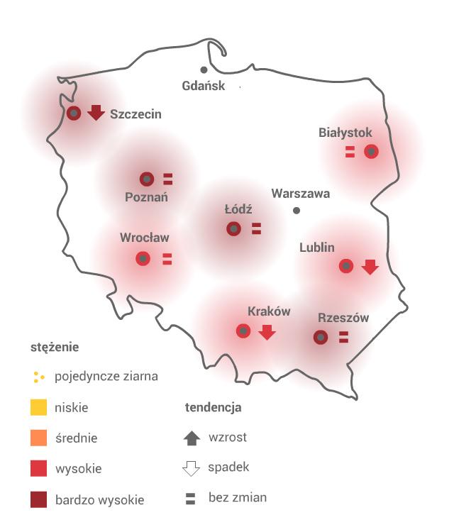 BRZOZA /Grafika RMF FM /