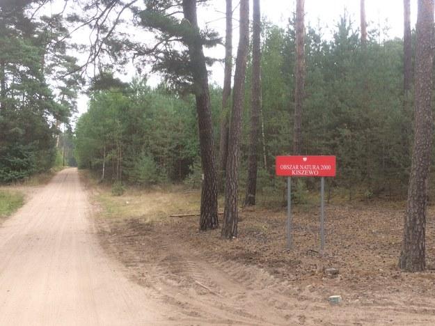 Budowa na terenie obszaru Natura 2000 /Mateusz Chłystun /RMF FM