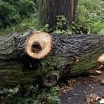 Budy Lucieńskie: Drzewo spadło na namiot harcerzy