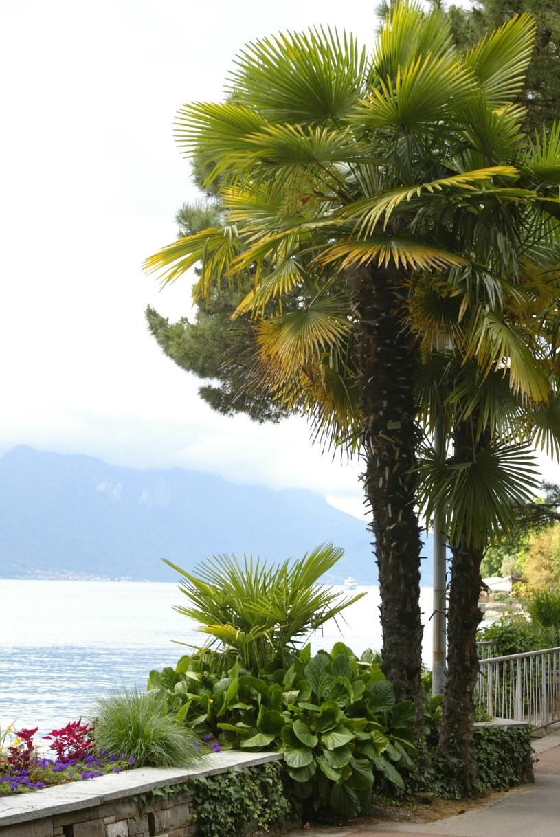 Bujna roślinność w Montreux /INTERIA.PL
