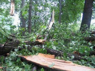 Burze połamały wiele drzew /RMF