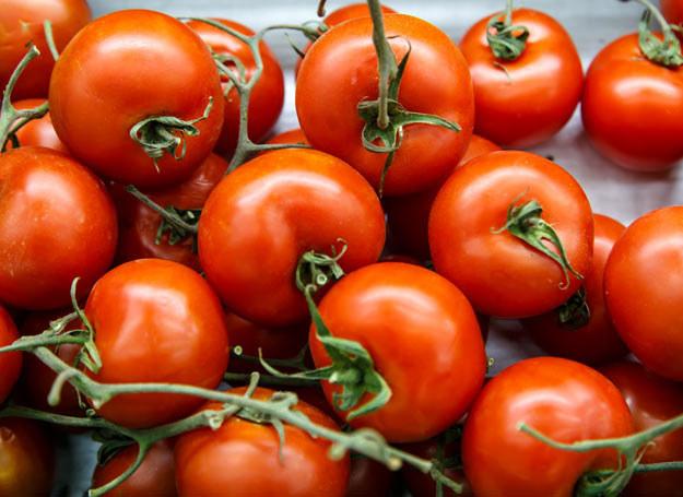 By pomidory trafiały do konsumentów w jak najlepszym stanie, producenci zrywają je z krzaków, kiedy są jeszcze zielone /Picsel /123RF/PICSEL