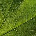 By przetrwać, rośliny wykonują matematyczne obliczenia