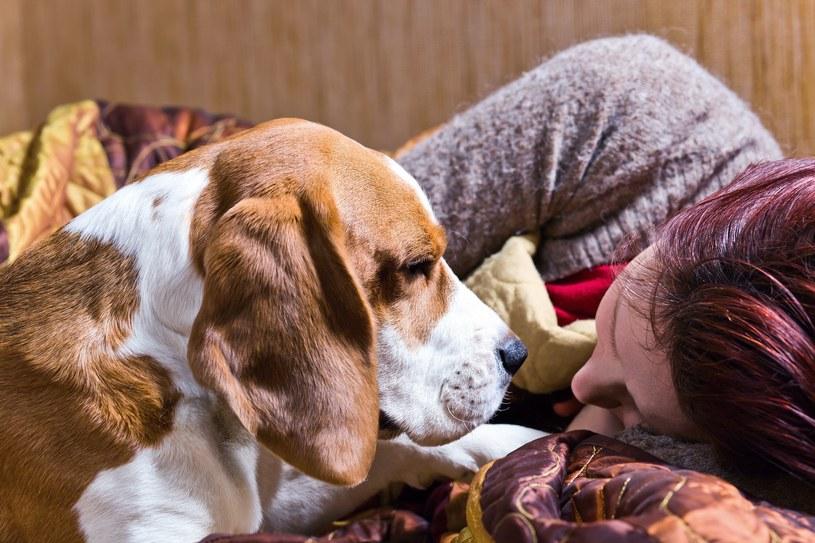 Być może psy będą wykorzystywane do wykrywania koronawirusa /123RF/PICSEL