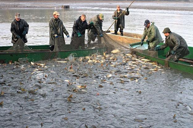 Był czas, kiedy Polacy uważali ryby za gorszy substytut mięsa /AFP