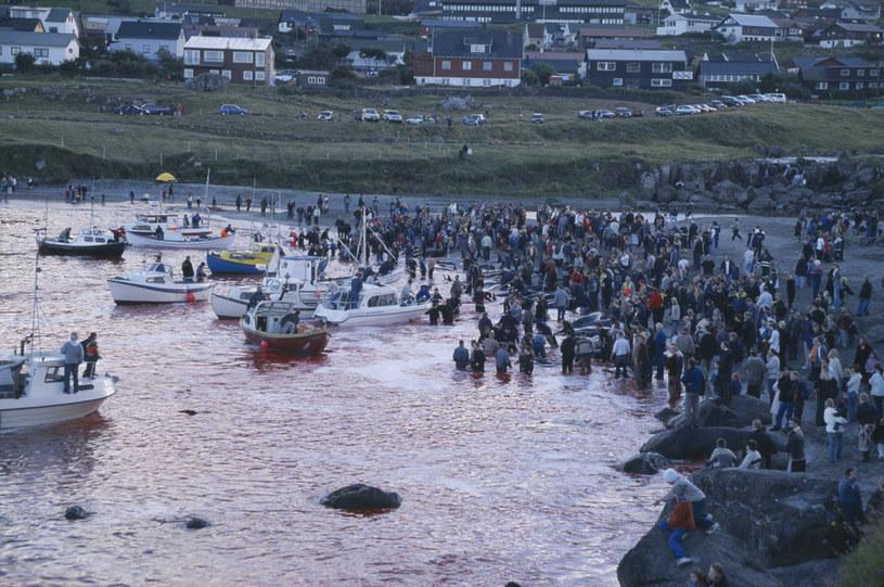 Całe zdarzenie jest obserwowane przez mieszkańców Wysp Owczych /UniversalImagesGroup / Contributor /Getty Images