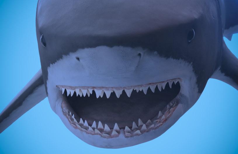 Carcharodon megalodon /123RF/PICSEL