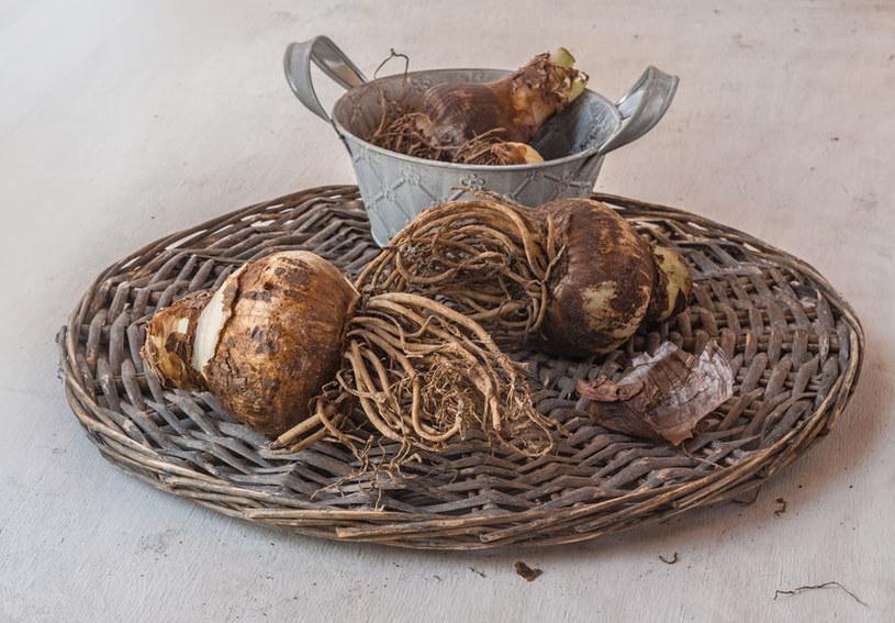 Cebulki zwartnicy /©123RF/PICSEL