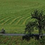 Cena 1 hektara wyniosła ponad 17 tysięcy złotych