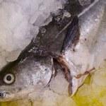 Centra sprzedaży ryb nie poprawiły konkurencyjności