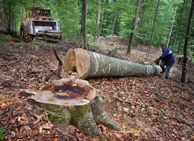 Ceny drewna poszły w górę jednak czeka nas spadek cen /AFP