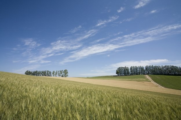 Ceny gruntów rolnych w ostatnich pięciu latach podwoiły się /© Panthermedia