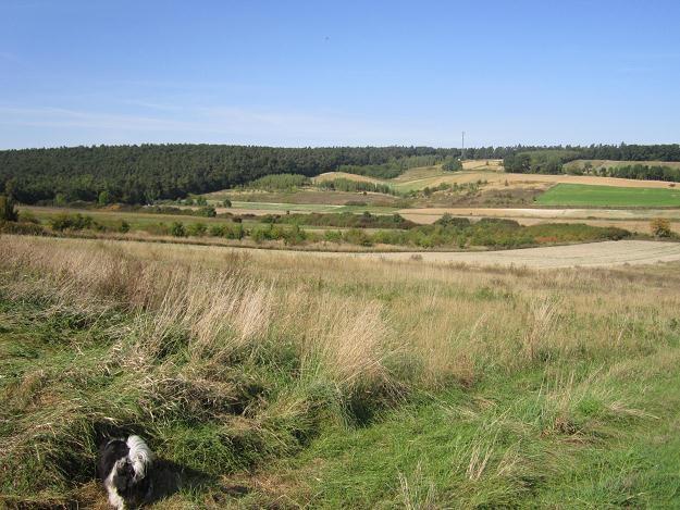 Ceny nieruchomości rolnych są zróżnicowane i zależą m.in. od położenia gruntów i jakości gleb /INTERIA.PL