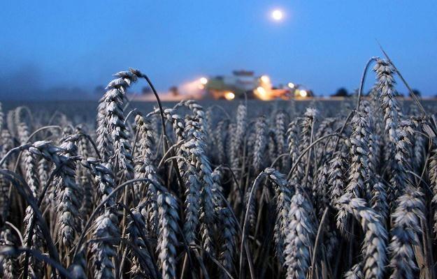 Ceny pszenicy są najniższe od wielu lat /AFP