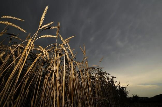 Ceny żywności na świecie nadal dołują /AFP